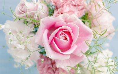 12 Beautiful And High Quality Flower Wallpapers